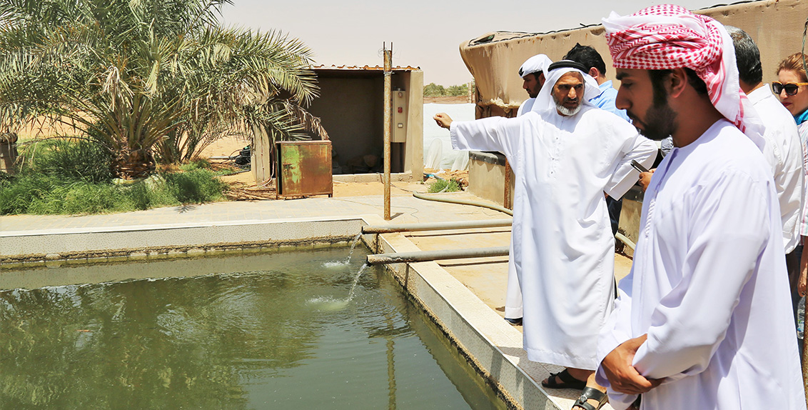 As part of its continued knowledge-sharing efforts, the International Center for Biosaline Agriculture (ICBA) recently organized a four-day training course on integrated agri-aquaculture systems for desert environments for a diverse group of UAE-based researchers, extension staff and farmers.