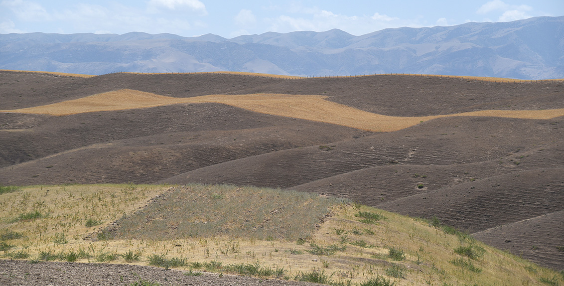 A seed isle of kochia and burnt swathes of Mr. Abdusattorov's land.