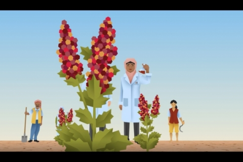 Quinoa, a future-proof crop for food security (Animation)