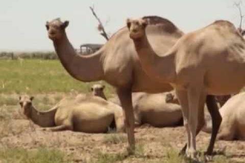 Новая жизнь пустыни