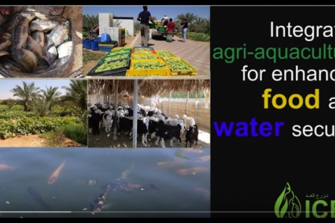 Integrated aqua-agriculture for food, water and economic security