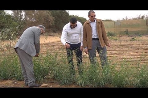 Improving forage production on salt-affected farms in Laayoune, Morocco