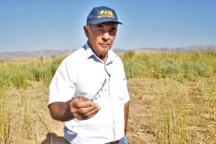 Dr. Mavlon Pulodov, a retired director of the National Center for Genetic Resources of the Tajik Academy of Agricultural Sciences, cannot hide his contentment: the seed yield is enough to cover 100 hectares of land next year.
