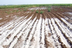 With some 11m hectares of salt-affected lands, Ethiopia ranks first in Africa in terms of soil salinity caused by human activities and natural factors. This is a big problem for the second most populous country in the continent where agriculture accounts for 40 percent of the GDP, 80 percent of the total employment and 70 percent of the exports.